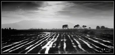 Photo: Backlight in a rice field   My contribution to: #monochromemonday Curator: +Siddharth Pandit  #fineart #critiquepls #plusphotoextract curator +Jarek Klimek #fineartpls