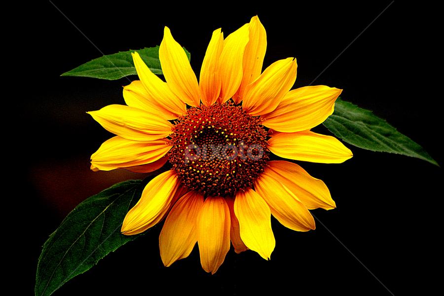 by Subho Saha - Nature Up Close Flowers - 2011-2013
