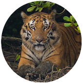 Sundarban Tour and Travel Guide