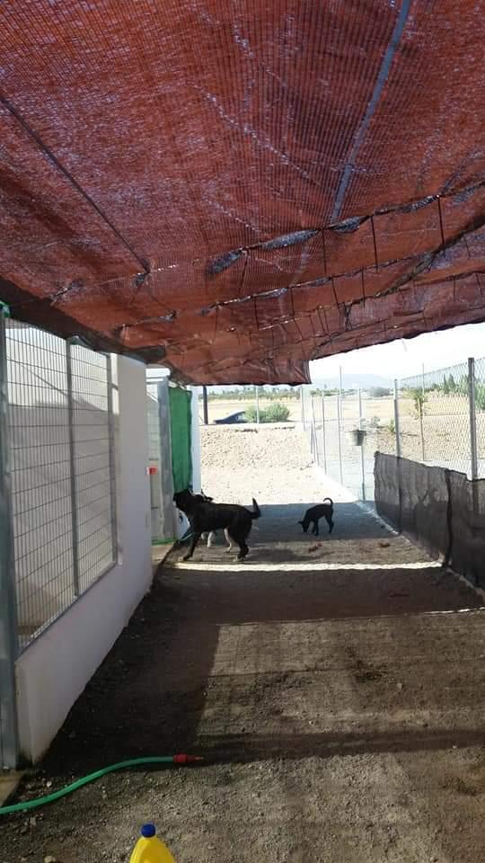 Algunos perros del centro de acogida de Huércal-Overa