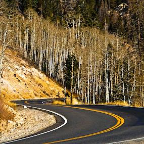 Twisting by Brent Flamm - City,  Street & Park  Street Scenes ( mountain, cedar breaks, visitors, rock, forest, travel, road, gravel, aspen, national park, vacation, utah, pine )