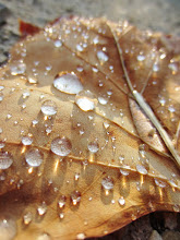 Photo: Rain droplets on a fallen autumn leaf at Cox Arboretum in Dayton, Ohio.