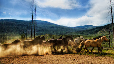 Photo: Horses Running Wild in Yellowstone - from Trey Ratcliff at http://www.StuckInCustoms.com - all images Creative Commons Noncommercial
