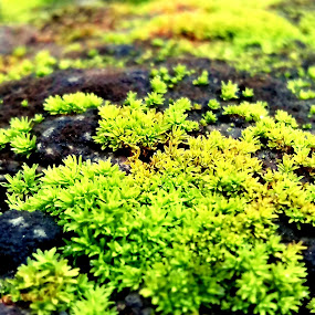 Bryophyte:moss by Aarti Chaudhary - Nature Up Close Other plants