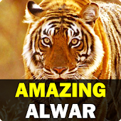 Amazing Alwar