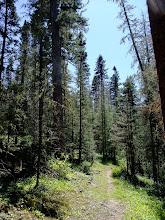 Photo: Tall trees