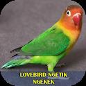 Lovebird Ngetik Ngekek Offline icon