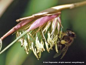 Photo: Diese Bambusserie zeigt was es heisst Bambus blüht alle 100 Jahre.