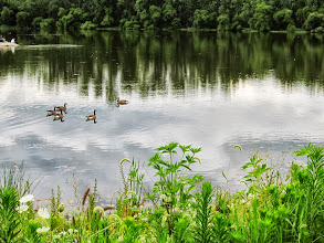 Photo: Canadian geese on the lake at Carriage Hill Metropark in Dayton, Ohio.