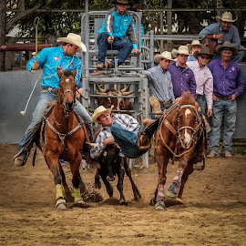 Steer Wrestling by Brent McKee - Sports & Fitness Rodeo/Bull Riding ( galloping, fuji x, qld, mareeba rodeo, steer wrestling, horses )