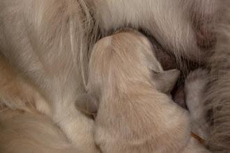 Photo: 14 augustus: Marjon maakt een plaatje van een drinkende pup