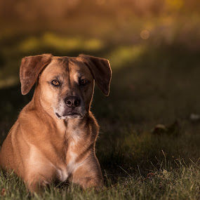 by Michael Last - Animals - Dogs Portraits