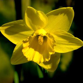 by Stephen McKibbin - Nature Up Close Flowers - 2011-2013