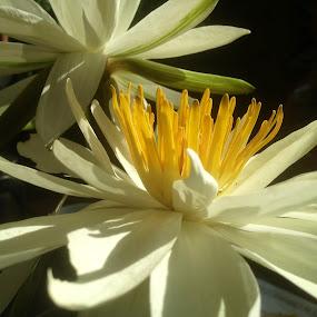 Purity by Jane Sherwin - Flowers Flowers in the Wild