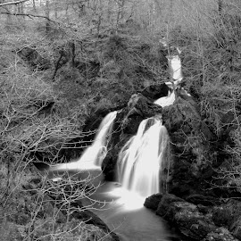 Atkinson's Coppice by DJ Cockburn - Landscapes Waterscapes ( forest, britain, rural, winter, white water, long exposure, colwith force, grayscale, lake district, uk, waterfall, river brathay, wood, black and white, england, nature, countryside, tree, deciduous, water, atkinson's coppice, waterscape, monochrome, river, cumbria, landscape )