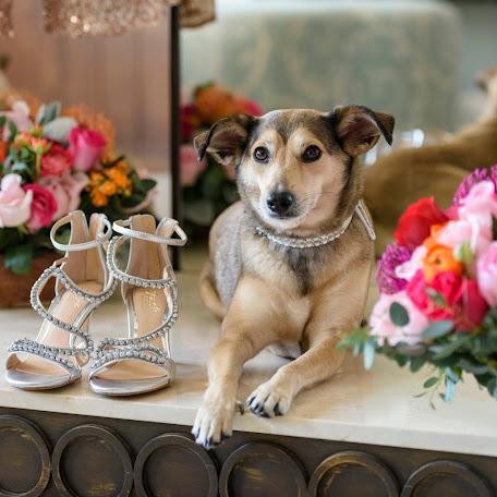 Wedding photographer Eva Sica (sica). Photo of 09.01.2018