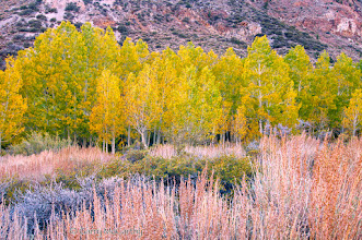 Photo: Aspens; Bishop Creek, October 2010  #treetuesday