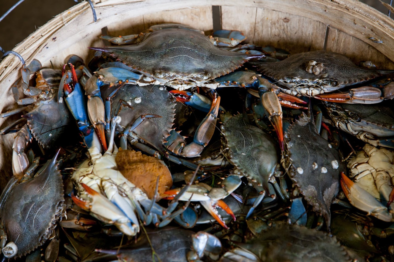 raw crabs seafood