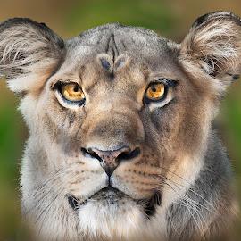 Portrait by William Underwood  - Digital Art Animals