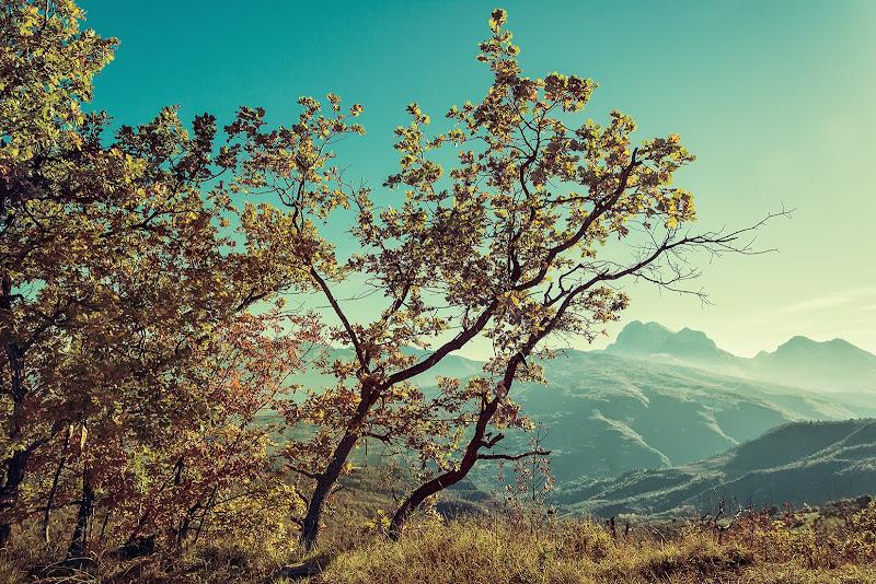 un caldo autunno di renzodid