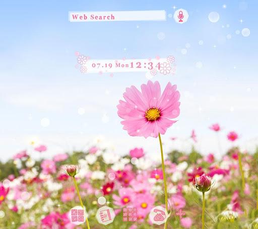 Pink Cosmos  Flower Theme 1.0.0 Windows u7528 1