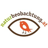 naturbeobachtung.at by SPOBSTER