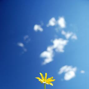 Flower Power by Dan Allard - Nature Up Close Gardens & Produce ( pwcflowergarden, sky, blue, bloom, yellow, blossom, flower )