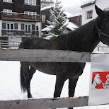 Horse in Zermatt in Zermatt, Valais, Switzerland