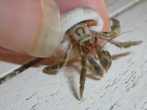 Photo: hermit crab