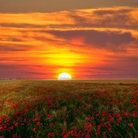 by Marijan Vucic - Landscapes Prairies, Meadows & Fields