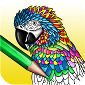 Colorish: adults coloring book