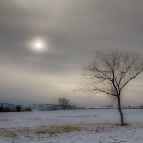 Solitary Winter Tree by John Shelton - Landscapes Prairies, Meadows & Fields ( clouds, haze, winter, reno, tree, nevada, rancho san rafael,  )