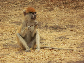 Photo: Safari!