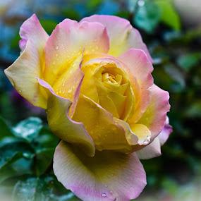 by Terry Oviatt - Flowers Single Flower (  )