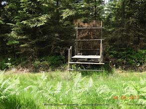 Photo: pracht van een bos
