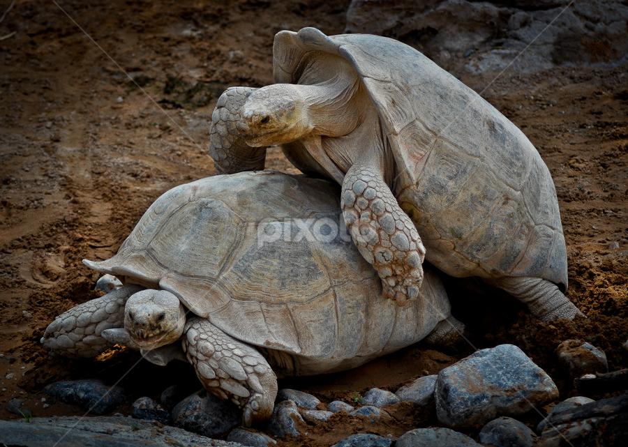by Rodolfo Alar - Animals Reptiles