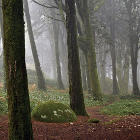 Sintra by Paulo Jorge - Landscapes Forests ( peninhafogportugal )