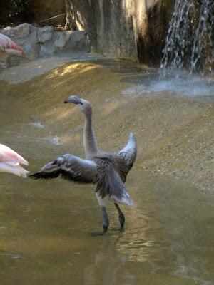 Le ali della liberta' di magnolia83