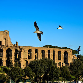 by Nadya Staneva - Buildings & Architecture Public & Historical ( bird, roma, seagull, tree, ruins, historical )