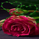 Green Heart Rose LWP for PC-Windows 7,8,10 and Mac