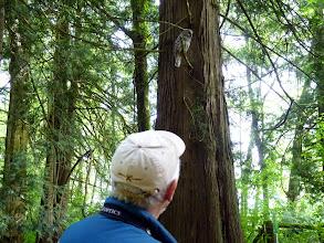 Photo: Glen Carlson has a look at a Barred Owl during an A Rocha bird survey.