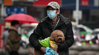 El perro contagiado con coronavirus en Hong Kong falleció.