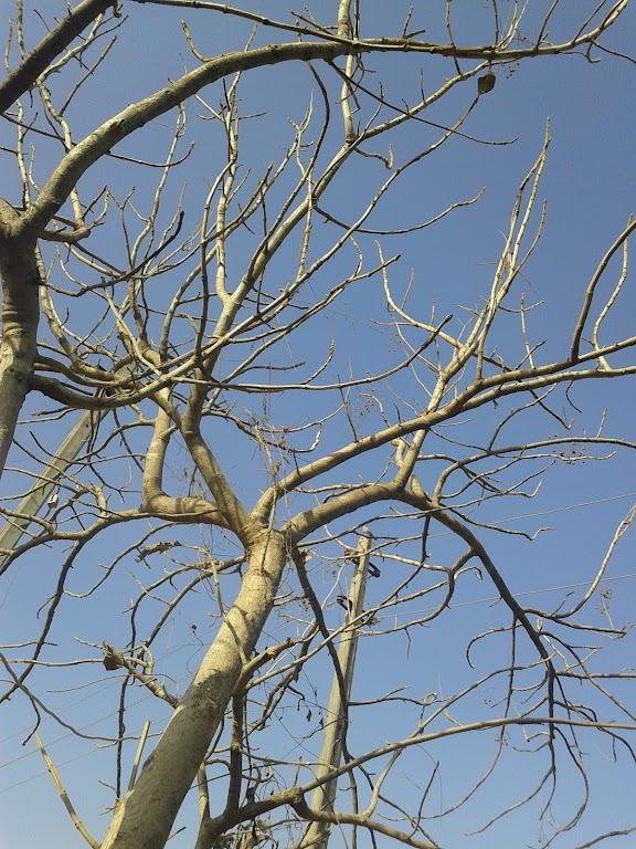 Wysoka trwałość drewna tekowego sprawia, że ma ono szerokie zastosowanie.