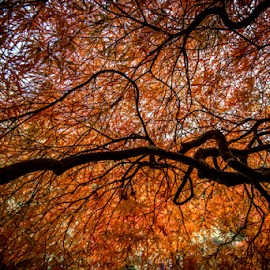 Orange by Darren Sutherland - Nature Up Close Trees & Bushes