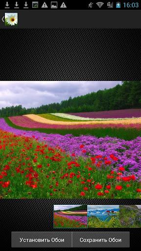 Обои Природа Цветы