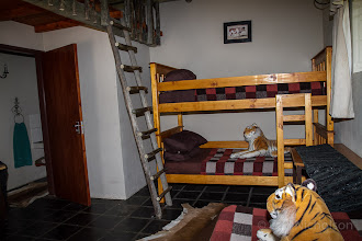 Photo: Blue Wildebeest - inside kids room
