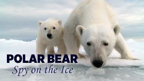 Polar Bear: Spy on the Ice thumbnail