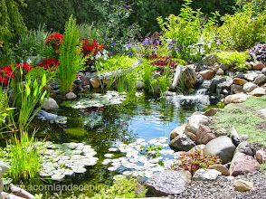 Photo: #KoiPond Maintenance Rochester NY, by Acorn Ponds & Waterfalls, to keep your pond looking great throughout the year, be sure to get on our spring #PondCleaning schedule.  Call us now at 585.442.6373 or fill out this contact form and someone will get back to you soon: www.acornponds.com/spring-maintenance.html  Click here to learn more about Pond Maintenance Services: www.acornponds.com/pond-maintenance.html  To learn more about garden pond or fish pond spring maintenance, click here: www.facebook.com/notes/acorn-landscaping-landscape-designlightingbackyard-water-gardens/pond-maintenance-rochester-nyfish-pond-cleaning-pittsford-fairport-penfield-ny-b/244212912282505  Click here for a free Magazine all about Ponds and Water Features: http://flip.it/gsrNN  Click here to learn more about Ponds Installations: www.acornponds.com/ponds.html  Sign up for your personal design consultation here: www.acornponds.com/contact-us.html  Find us on Houzz here: www.houzz.com/pro/acornlandscapedesign/acorn-landscaping-and-ponds-llc  Acorn Ponds & Waterfalls  585.442.6373 www.acornponds.com
