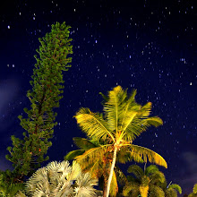 """Photo: My first attempt at star photography!  I miss seeing the stars every night. As a kid, we lived in North Scottsdale before it had developed up very much. There was a desert behind the house, and there you could see stars like this at night. This shot was taken in beautiful Antigua, where there is good visibility of the stars at nighttime, too. Now, living in Washington, DC, the stars are hardly visible. Hopefully soon, I can get a wider-aperture lens to capture more light from stars with less exposure time (minimizing the """"streaking"""" effect you see-- I'm not a fan of it). And, even better, trying this someplace where I can see the Milky Way would be a dream!  New Year's makes me think of stars! So, happy New Year to everyone!"""