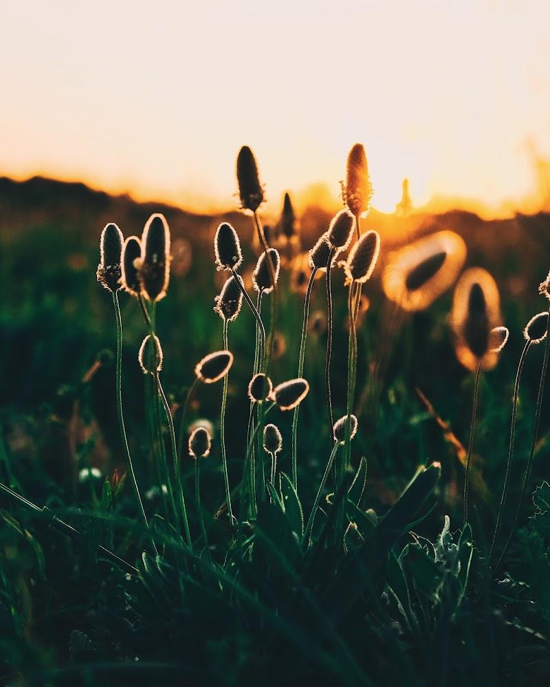Spring Sunset! di Federiconestola